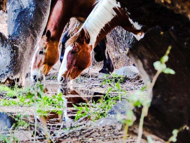 Caballos salvajes - Arroyo Tembrao - ph.@magapizarro